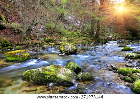 Mountain river in forest at spring time