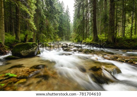 mountain river in summer with stream and high water in forest