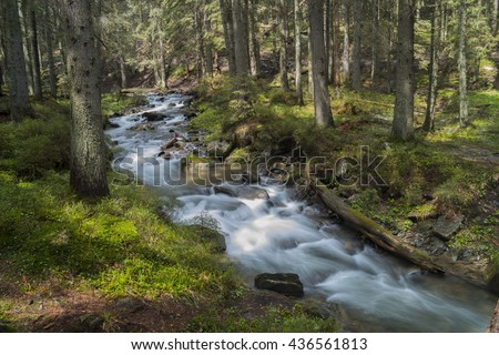 Mountain River in Sunlit Spruce Tree Forest