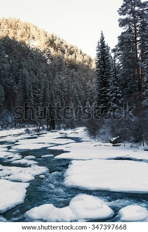 mountain river in winter among the firs. boiling water and snow.