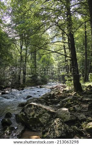 Mountain river Moravica on Ozren mountain, Sokobanja, Serbia - stock photo