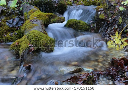 Mountain river waterfall Carpathian forest - stock photo