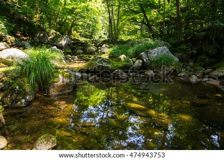 Mountain river with the purest water in the dense forest