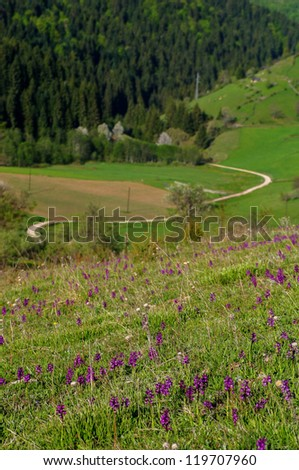 Mountain road and flowers - stock photo