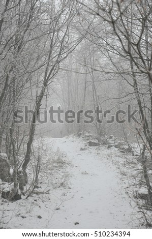 mountain road in deep snow with hoar-frost on a tree