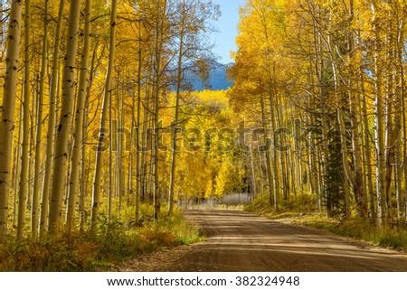 Mountain Road in Golden Aspen Grove - Autumn view of a mountain road winding through a dense aspen grove. Kebler Pass, Crested Butte, Colorado, USA. - stock photo