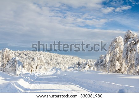 Mountain road in the southern Urals. Snow-covered thin wooden woods.