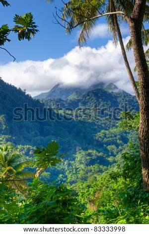 Mountain Scene in Edmund Forest St. Lucia - stock photo