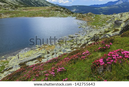 Mountain scenery with wild colorful flowers