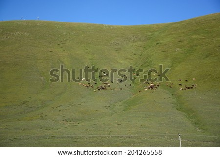 Mountain slope with grazing cows - stock photo