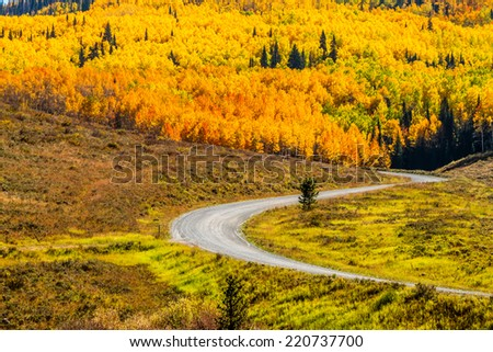 Mountain slopes filled with changing yellow, orange and green Aspen trees and dirt road winding through forest on sunny fall morning - stock photo