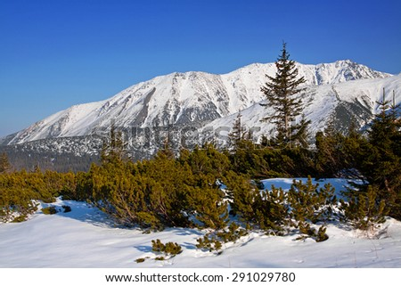 Mountain snowy landscape with pine trees in Zakopane - stock photo