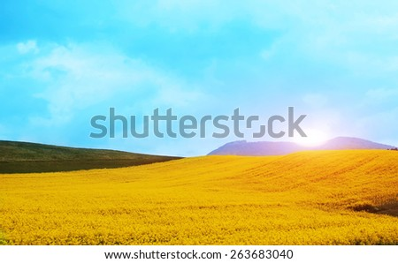 mountain spring landscape with declining sun with a field of yellow flowers - stock photo