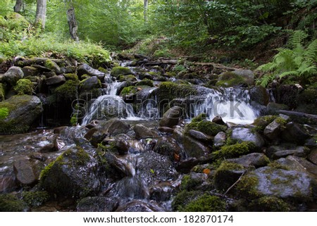 Mountain stream between trees and stones.