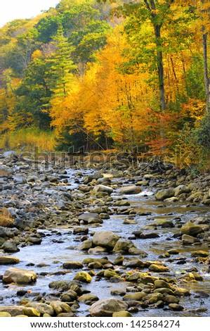 Mountain Stream in Fall - stock photo