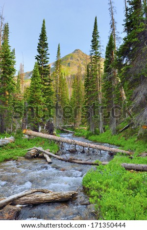 mountain stream in the wilderness of Colorado during summer - stock photo