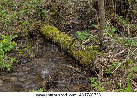 Mountain stream, the river flows through the fallen trees covered with moss