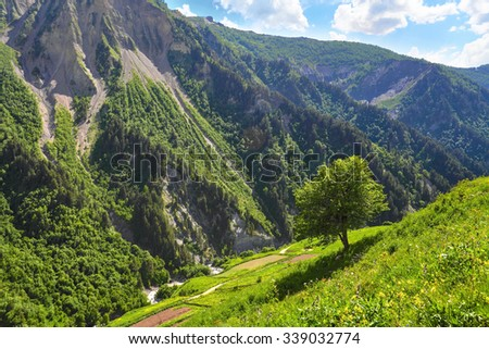 Mountain summer landscape. Green tree on the slope of hill with small field flowers - stock photo