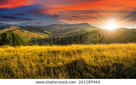 mountain summer landscape. meadow meadow with tall yellow grass and forests on hillside in sunset light - stock photo