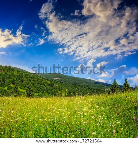 mountain summer landscape. pine trees near meadow and forest on hillside under  sky with clouds