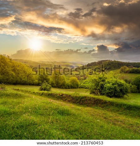 mountain summer landscape. pine trees near meadow and forest on hillside under  sky with clouds at sunset