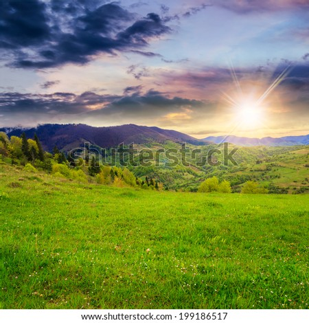 mountain summer landscape. trees near meadow and forest on hillside at sunset