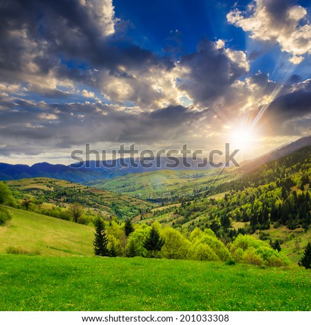 mountain summer landscape. trees near meadow and forest on hillside under  sky with clouds at sunset