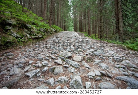 Mountain trail at the forest, Tatry, Poland