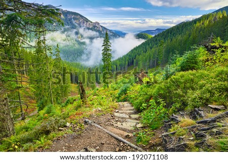 Mountain trail at the forest. The West Tatra Mountains, Carpathians. - stock photo