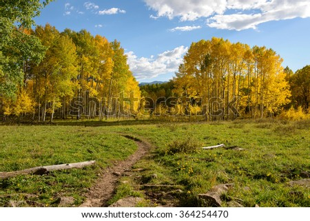 Mountain Trail - Autumn view of a mountain hiking trail, near Kebler Pass, Crested Butte, Colorado, USA. - stock photo