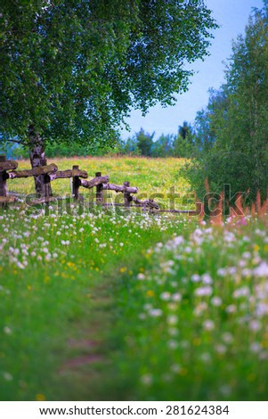 Mountain trail in the middle of the flowery meadow - stock photo