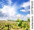 Mountain vineyard landscape in the Crimea. - stock photo