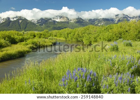 Mountain water runoff with purple lupine and mountains in Centennial Valley, near Lakeview, MT - stock photo