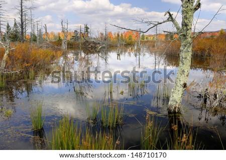 Mountain Wetlands in Autumn - stock photo