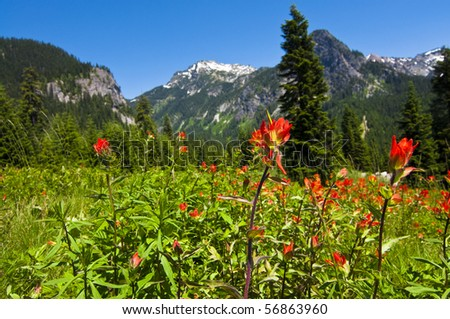 Mountain wildflowers landscape off of a hiking trail in western Washington on a beautiful sunny day. - stock photo