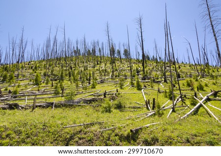 mountain with dry and felled trees in Yellowstone - stock photo
