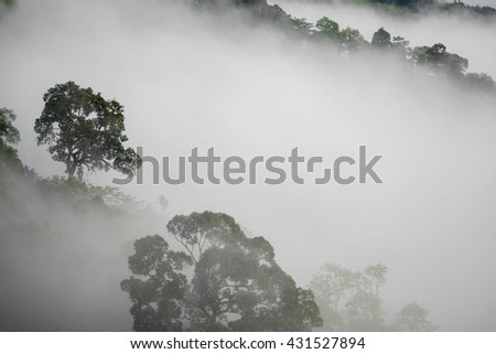 Mountain with fog in the morning.Forested mountain slope in low lying cloud with the evergreen conifers shrouded in mist in a scenic landscape view. - stock photo
