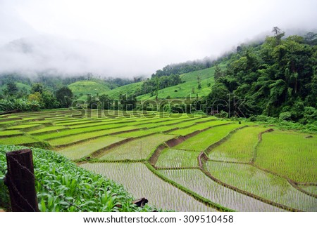 mountain with green farm rice in the evening, Thailand. Forest landscape