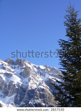 Mountains and the Pines - stock photo