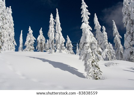 Mountains and Trees in Winter