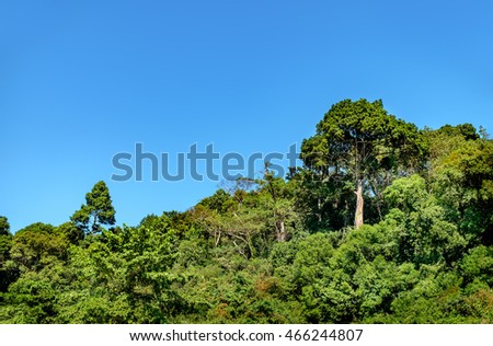 Mountains covered with various tropical trees under the blue sky at Chang island, Thailand. A tall tree stands out against the landscape.