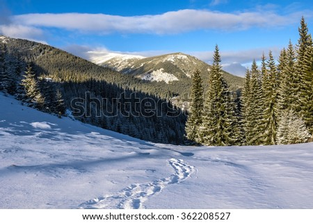 mountains in winter on a sunny afternoon in the carpathians