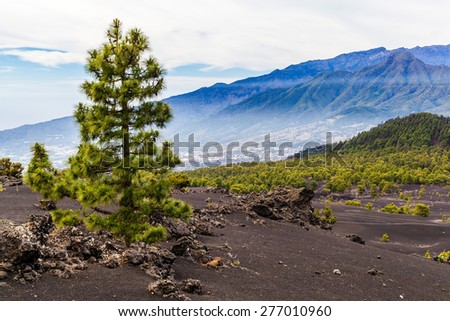 Mountains landscape volcanic dust and sand in green pine beautiful forest, valley and town Canary Islands La Palma - stock photo