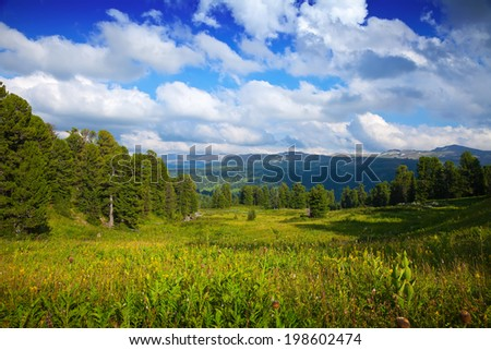 mountains landscape with cedar  forest. Altai, Siberia - stock photo