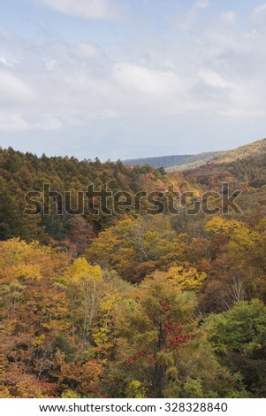 Mountains of autumn leaves