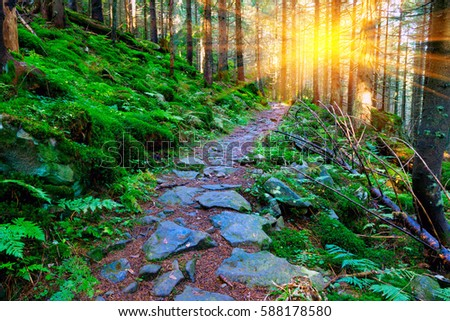 mountains scene with pathway in green forest