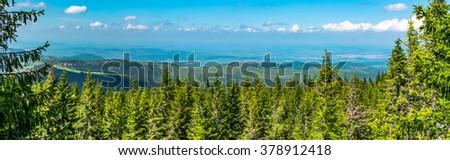 Mountaintop pine trees, panoramic view - Oncesti peak, Cindrel mountains, Paltinis resort area, Sibiu county, Romania, 1715m - 3frame  - stock photo