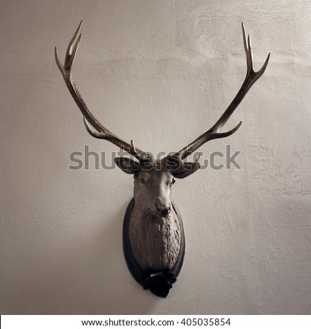 Mounted head of deer. Stuffed stag with monumental antlers. Hunting antique trophy. Taxidermy of deer´s head hung on white wall.  - stock photo