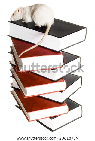 Mouse gonna to read - stock photo