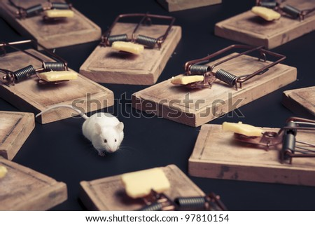 mouse in danger surrounded by mouse traps - stock photo